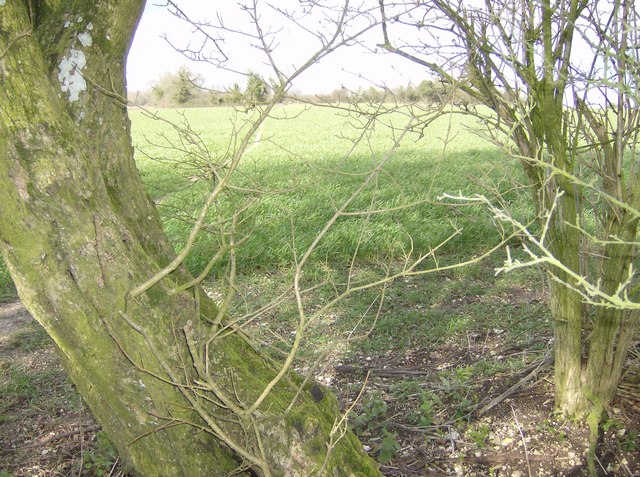 Footpath to Eckensfield