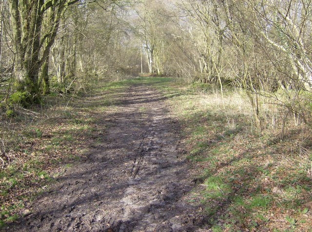 Entering Hale Wood