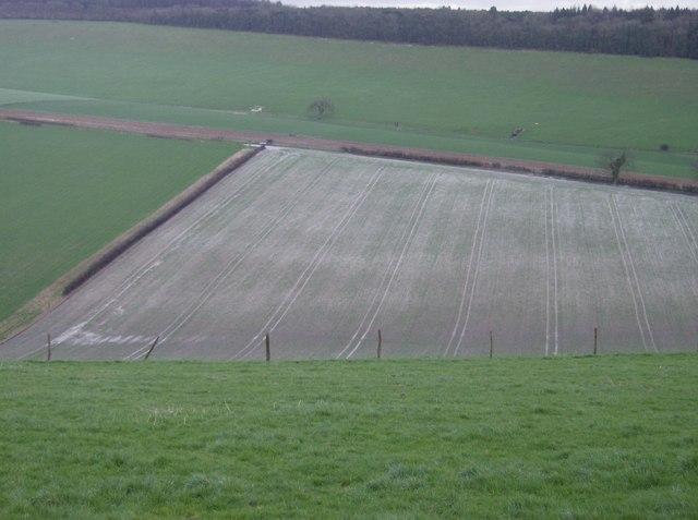 Farmland near West Harting Down