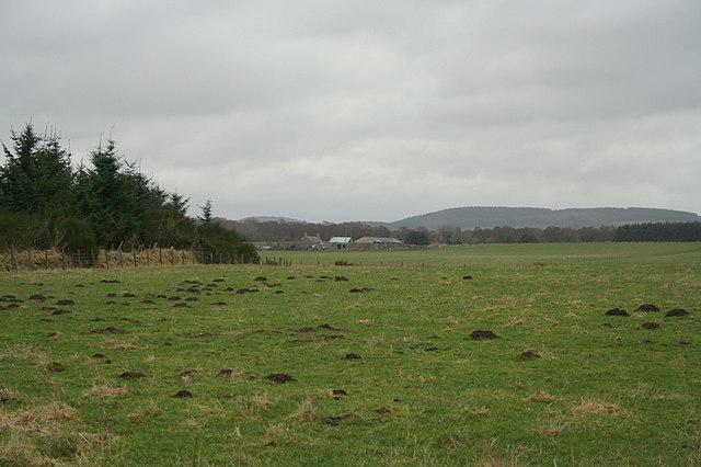 Whitemuir Farm