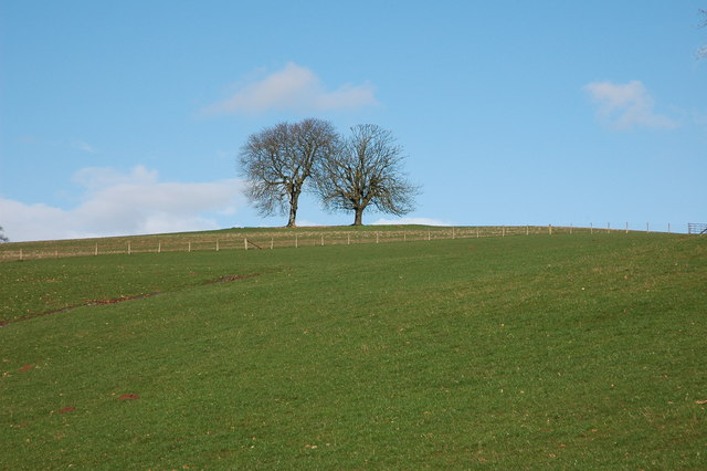 Trees on the skyline, Wormsley Hill