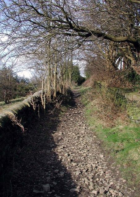Whiskers Lane