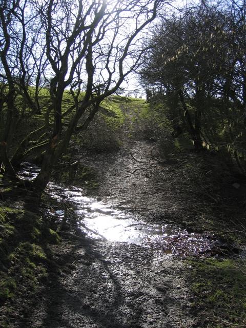 Stream Crossing near Pen-bedw
