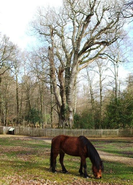 Knightwood Oak - March 2007