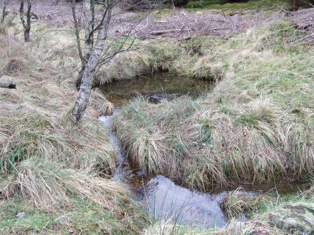 Forest pools