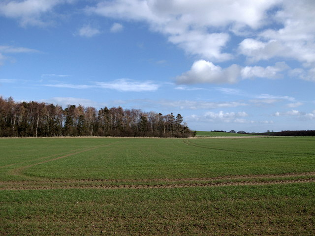 Field and plantation near to Duddo