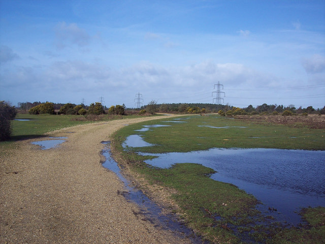 Gravel track and puddles on the New Forest