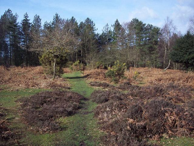 Path into Millersford Plantation