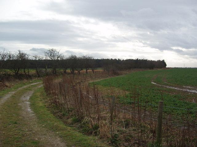 Lane leading to Overton Wood