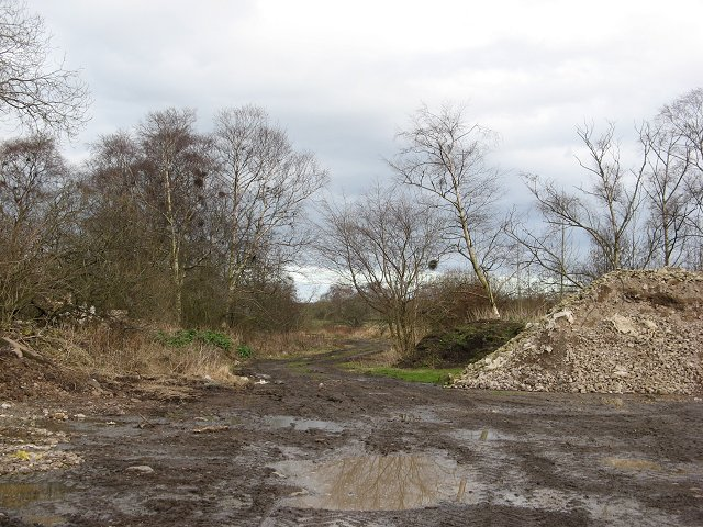 Bog wood