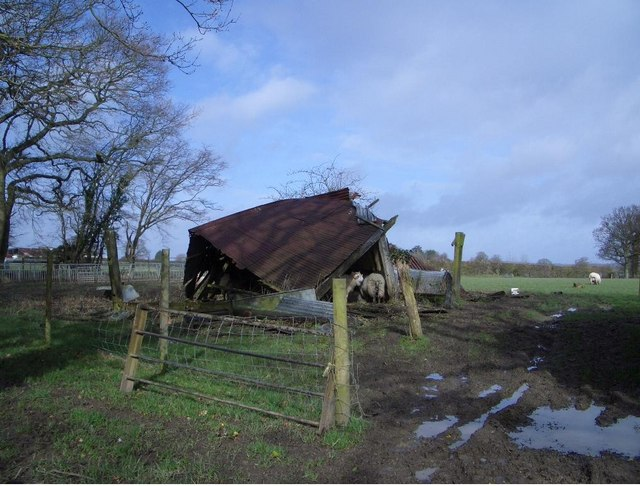 Sheep Shelter near Cowbeech