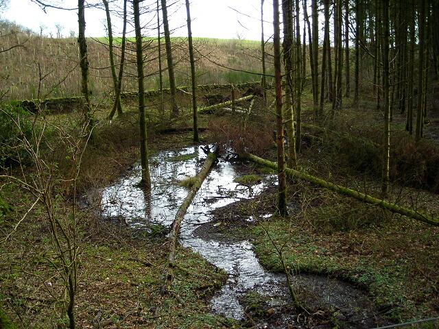 Forest Flooding Near Park Burn
