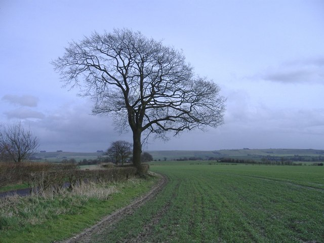 Downland, with tree