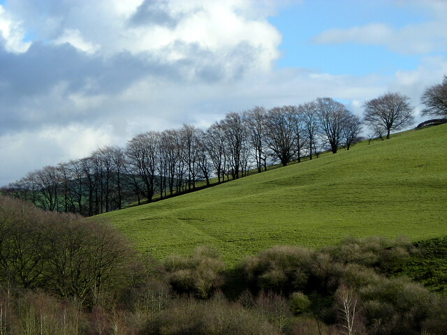 Northern Flank of Bow Hill