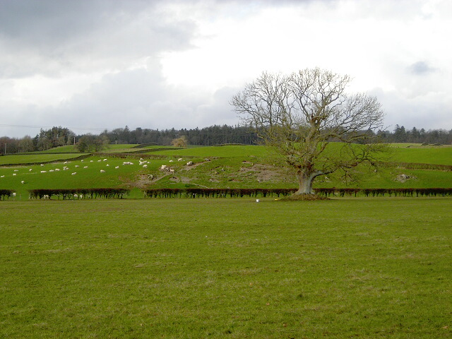 Fields at Duncow