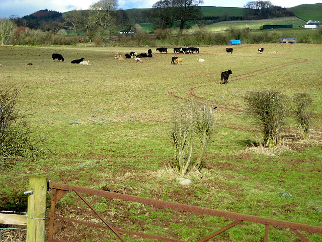 Cattle Near Greenbogue