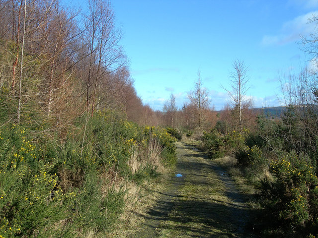 The Track Through Kilgrammie Wood