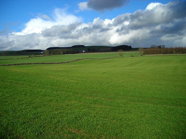 Fields Near Tinwald House