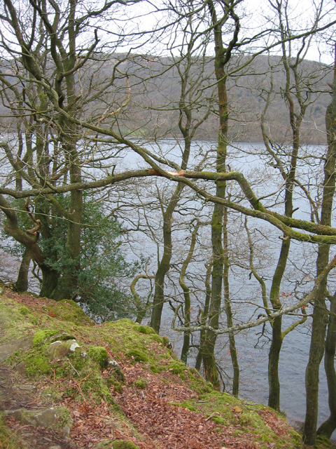 Wintry trees by Coniston Water