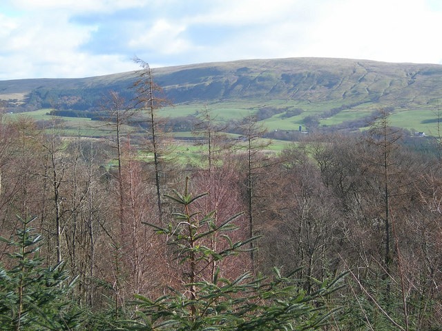 View From Kilgrammie Wood