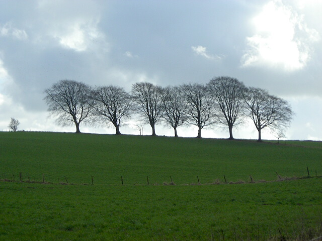 Line Of Trees Near Long Plantation