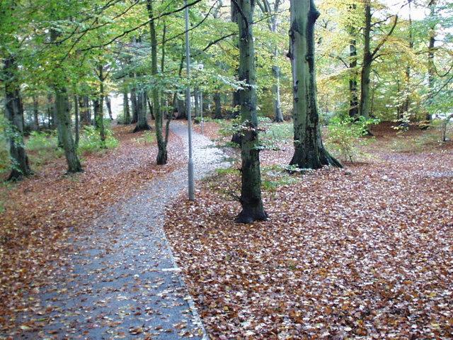 Culduthel Woods in autumn