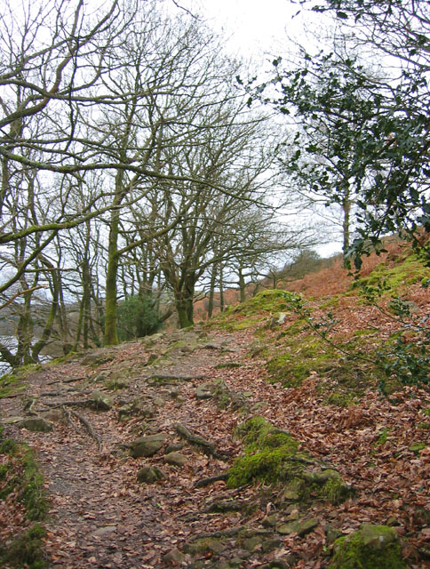 Woodland by Coniston Water