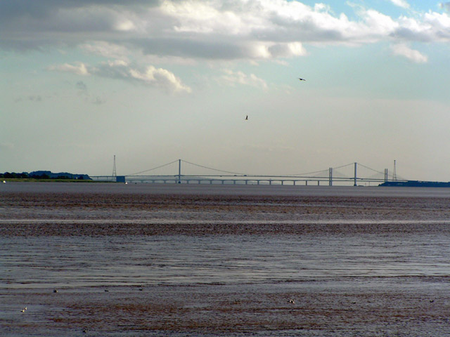 Two Severn Bridges and 2 Seagulls