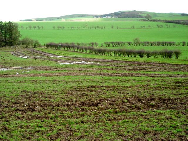 Muddy Field Near Torthorwald