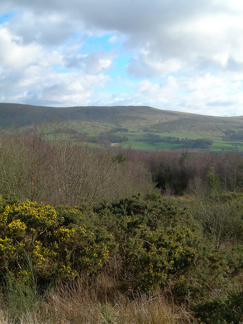 The View From Blawearie Wood