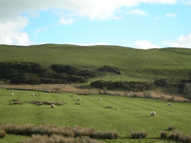 A Few Sheep