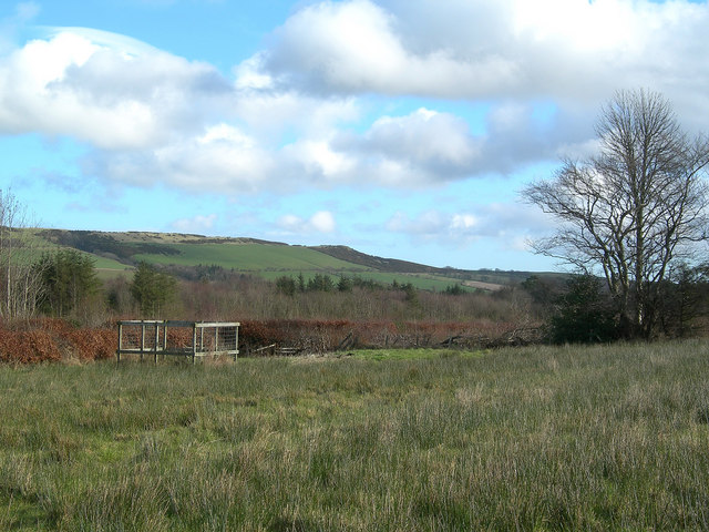 From Mochrum Wood