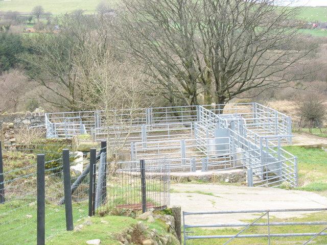Modern sheepfold at Maesog