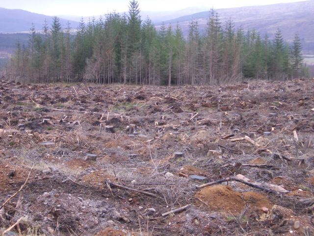 Forest demolition