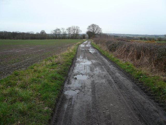 Foxstone Wood - Track leading to Staveley Lane