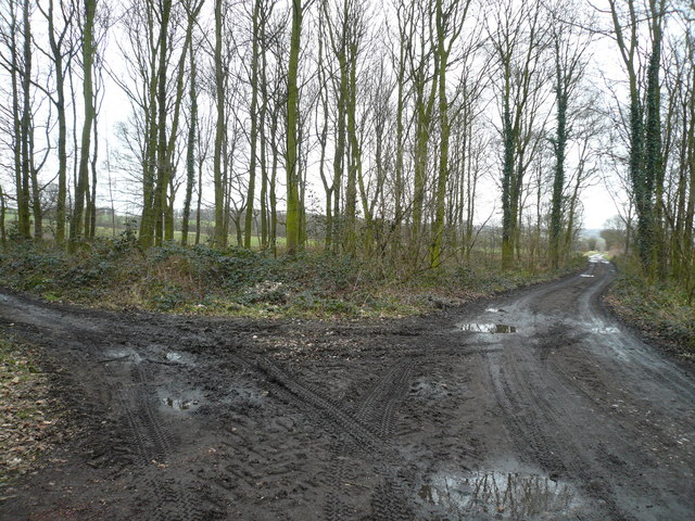 Foxstone Wood - Track Junction