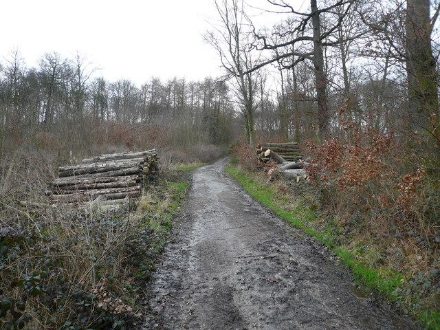 Foxstone Wood - Logging Operation