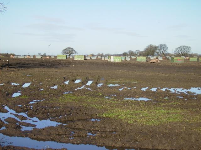 Pig Farm near Anchor Plain