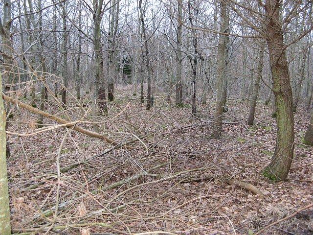 Woodland, Printonan