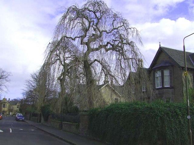 Lennox Row, Trinity