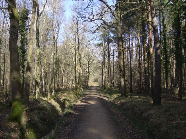 Beautiful bridleway