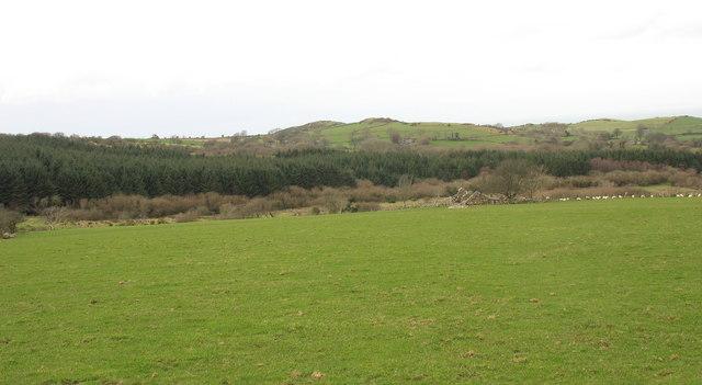 Field and woodland near Maesog