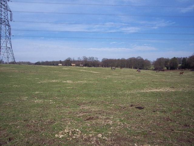 Horses grazing near Iping