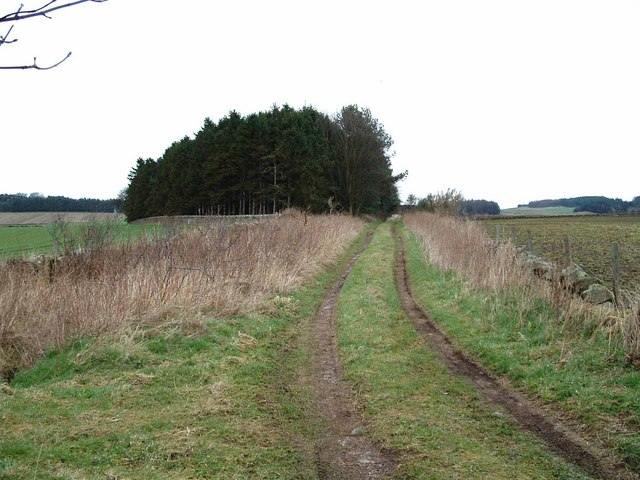 Farm track and woodland