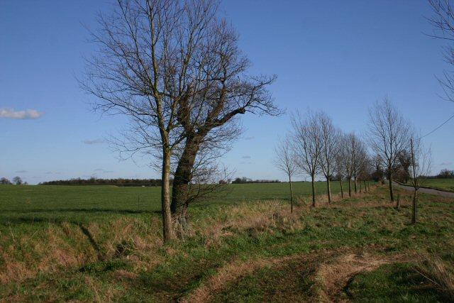 Roadside verge near Guilt Cross