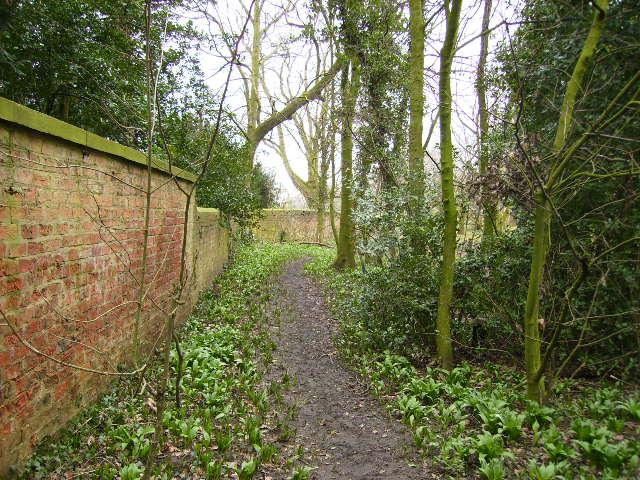 Footpath at Littlethorpe