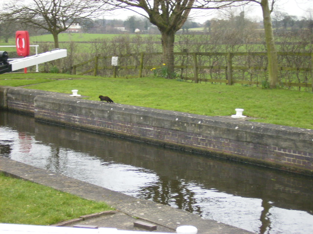 Lockside on the Ripon Canal