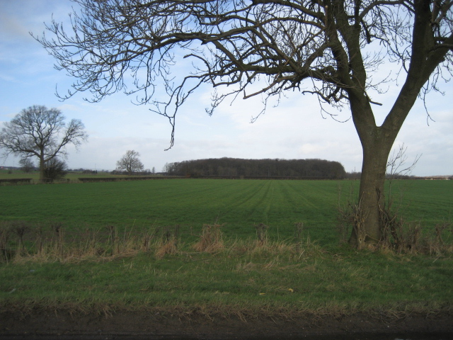 View towards Gatenby Wood