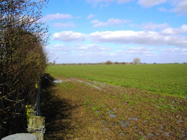 Field north of Bishopstone (2)