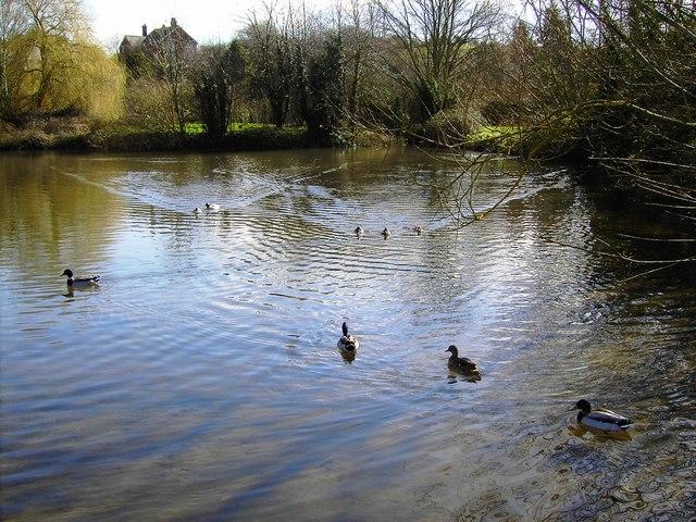 Village pond, Bishopstone, Swindon
